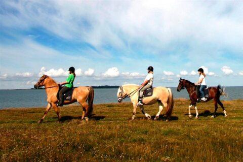 balade-cheval-centre-equestre-saint-jean-de-monts